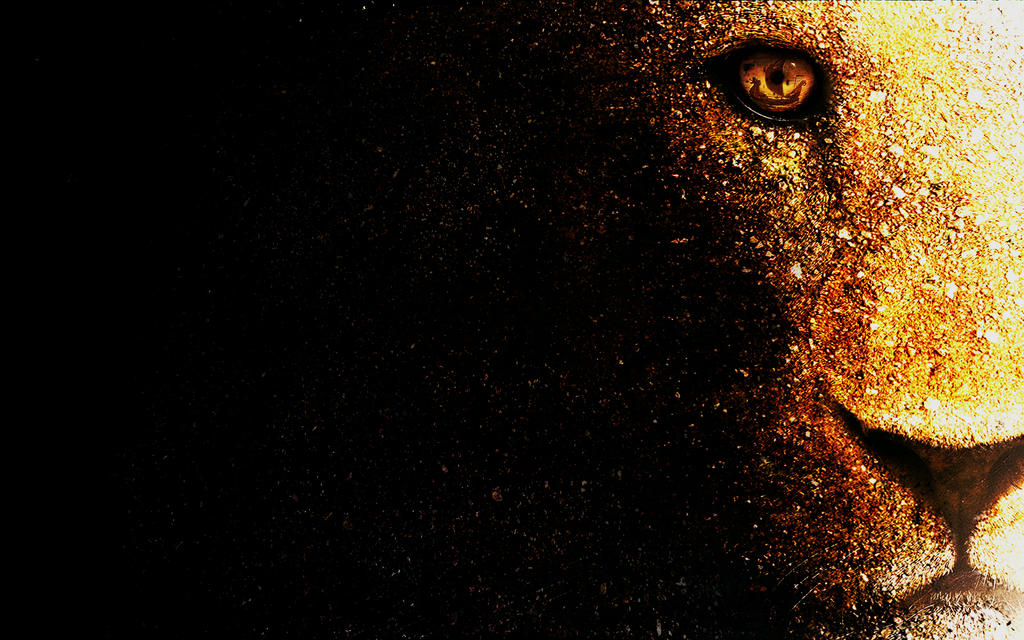 lion wallpaper desktop by mu6 on deviantart