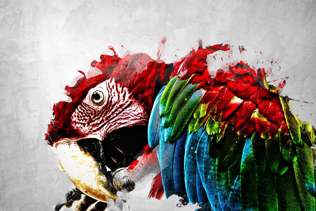 Birds wallpaper by mu6