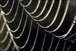 Spider's web 1