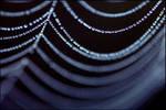 Spider's web 2