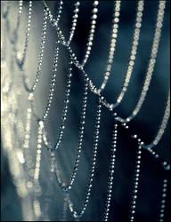 Spider's web 4