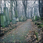 Jewish cemetery in Cracow I