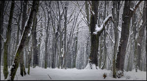 Forest - Winter