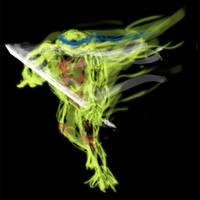 Ninja turtles - Leonardo by jlpicard1701e