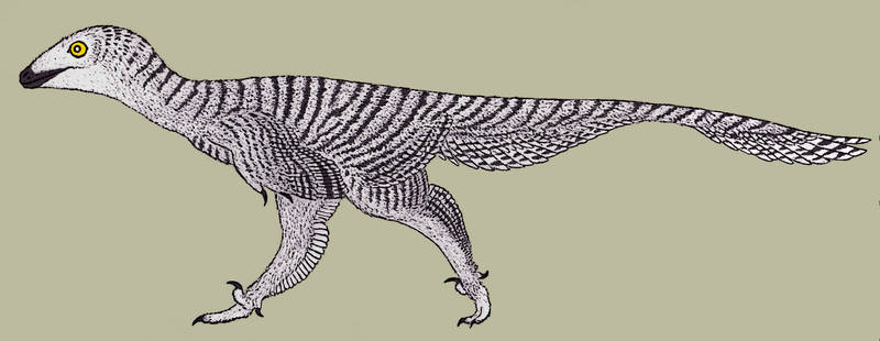Troodon formosus
