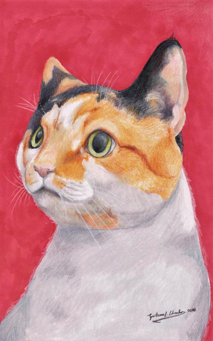 Cat (Felis Silvestris Catus) by GuillermoLabrador