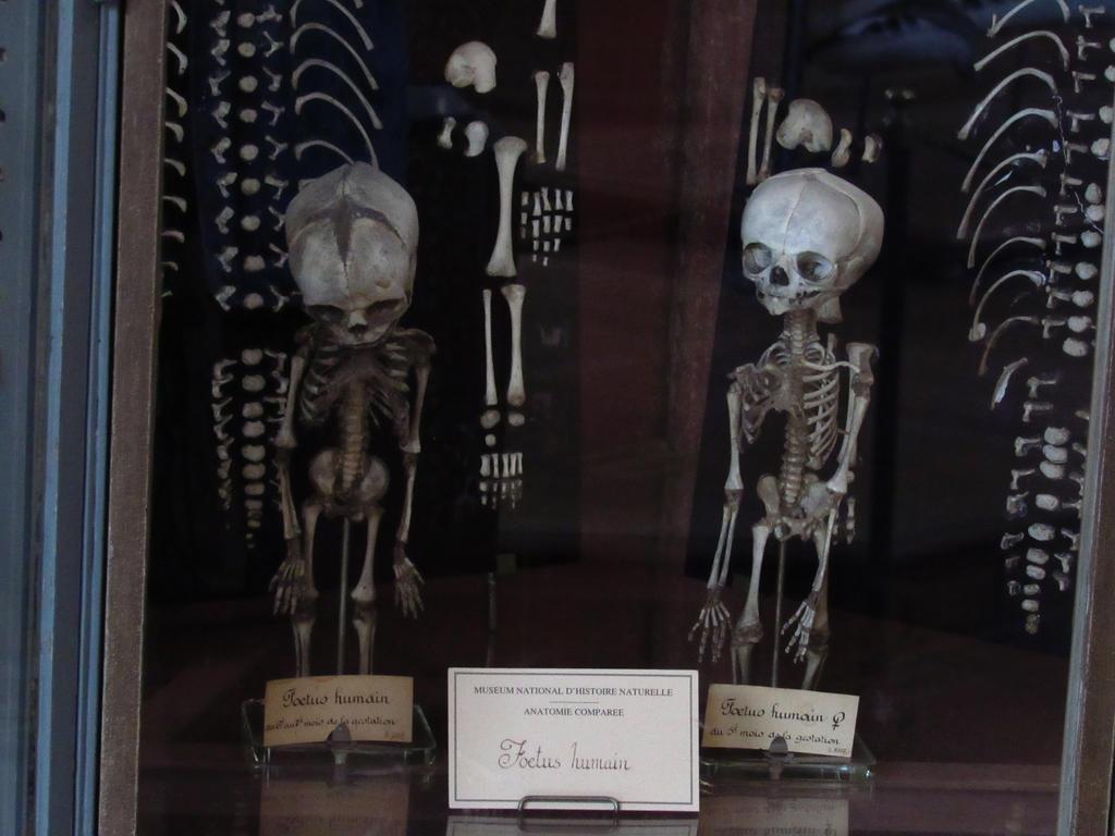 Paris - Anatomy registers by VannyPavelski on DeviantArt