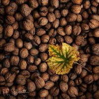 Harvest. by marc-bruno