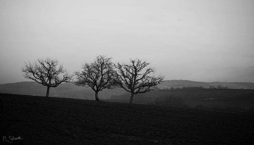 Solitude. by marc-bruno