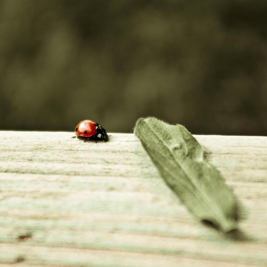 Ladybird. by marc-bruno