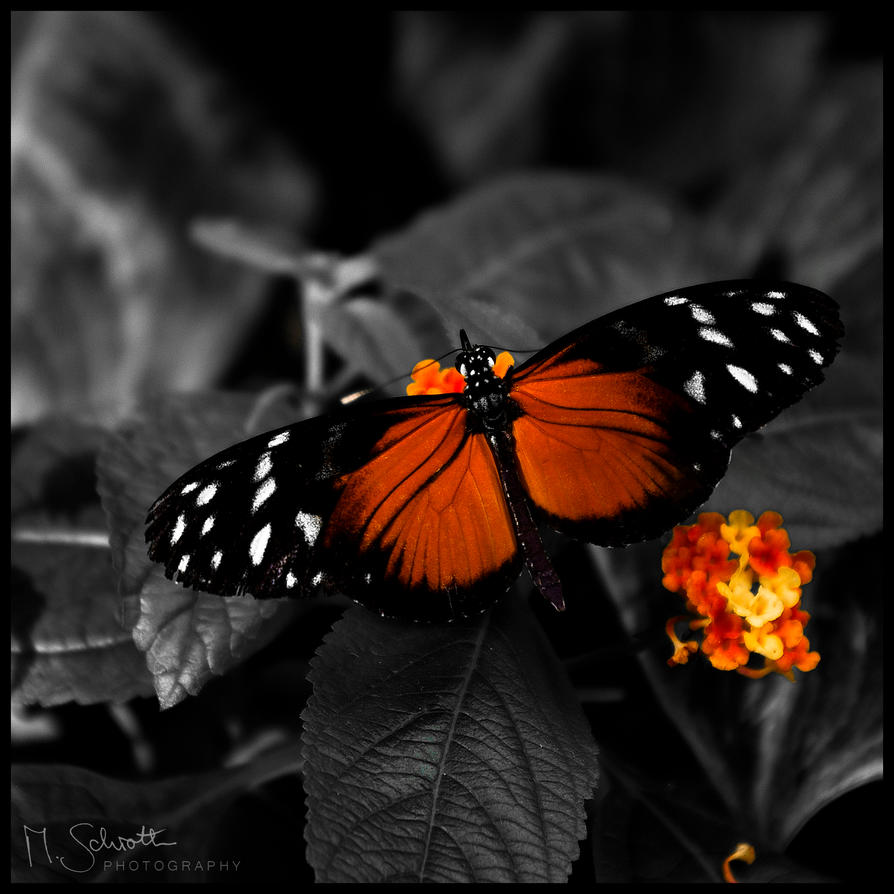 Butterfly. by marc-bruno