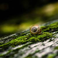 The Snail.