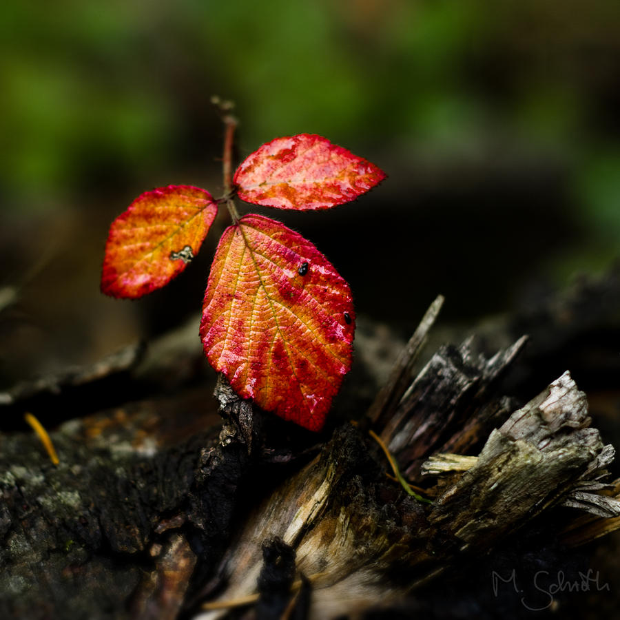 Autumn Leaf. by marc-bruno