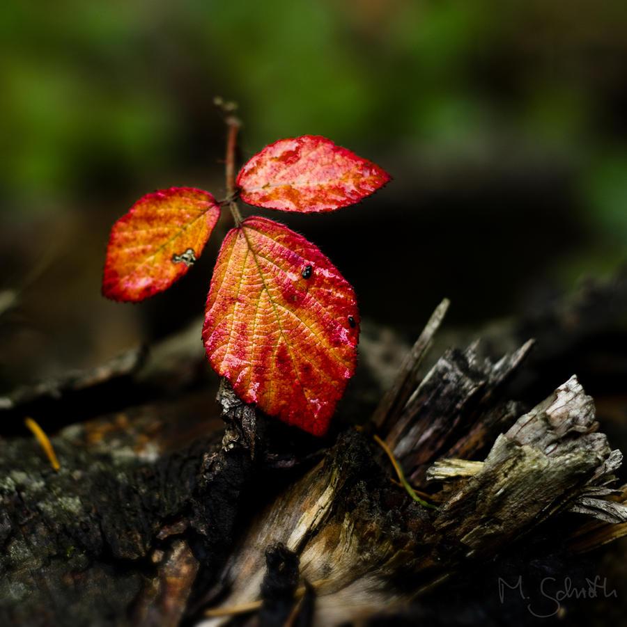 Autumn Leaf.