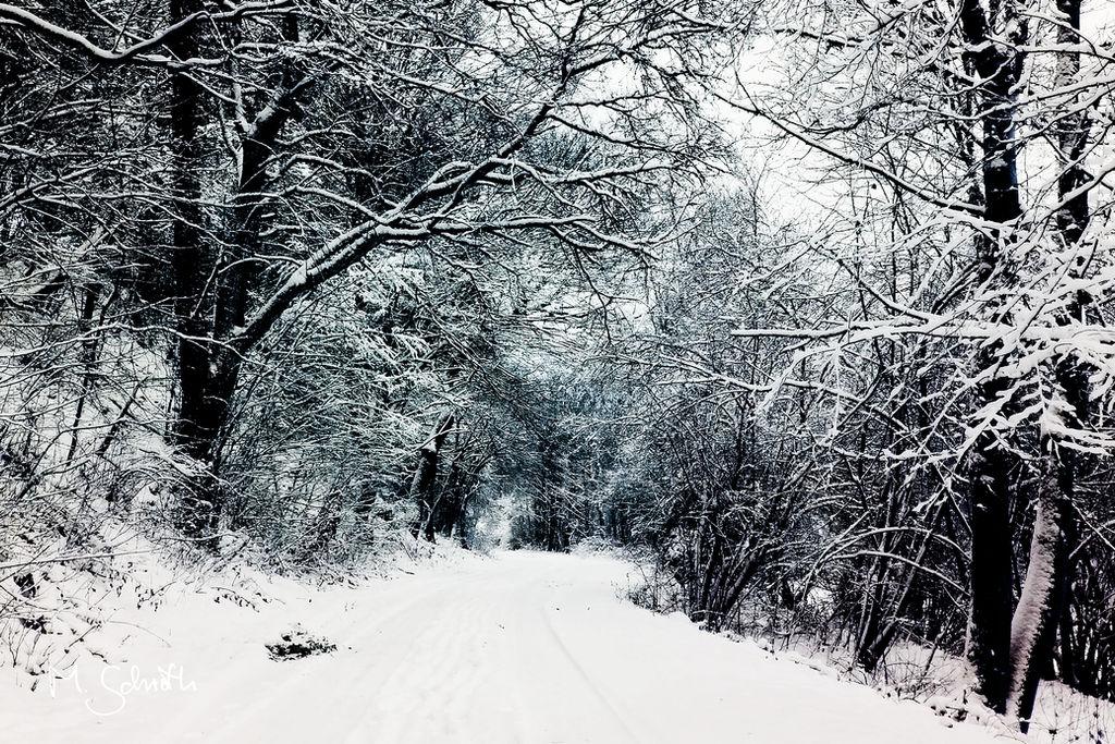 Blue Winter.