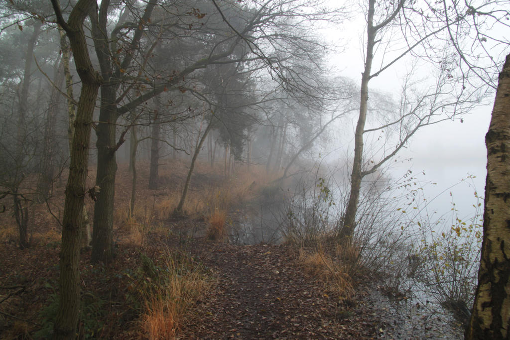 Forest stock 1 by PuckRietveldStock