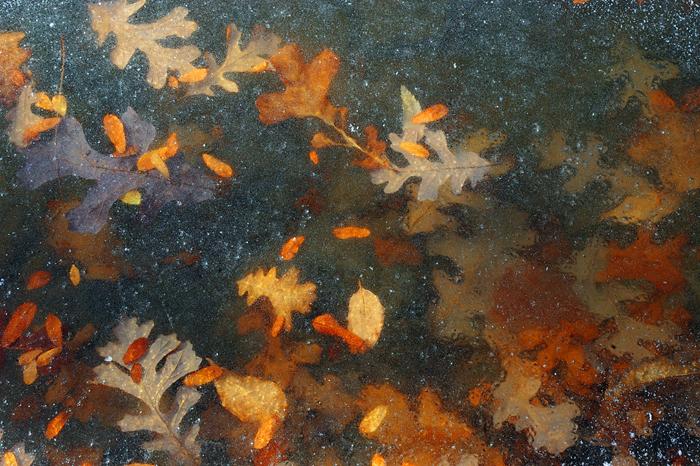 Frozen Fall by JoshHardin