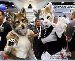 Coyote and Cat at SDCC