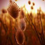 autumn fields by ellegabri