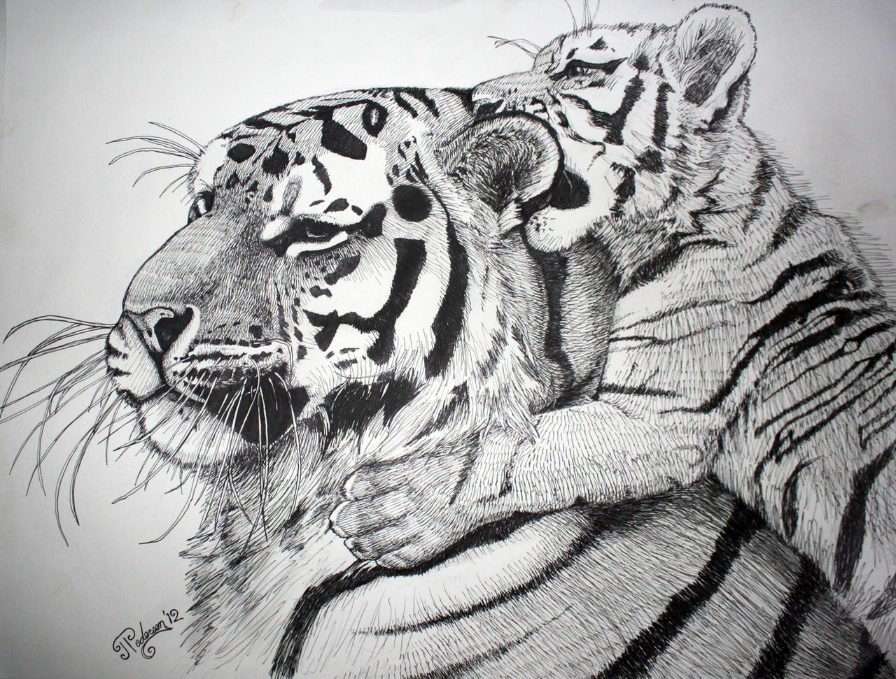 mother tiger and cub by artbyjpp on deviantart