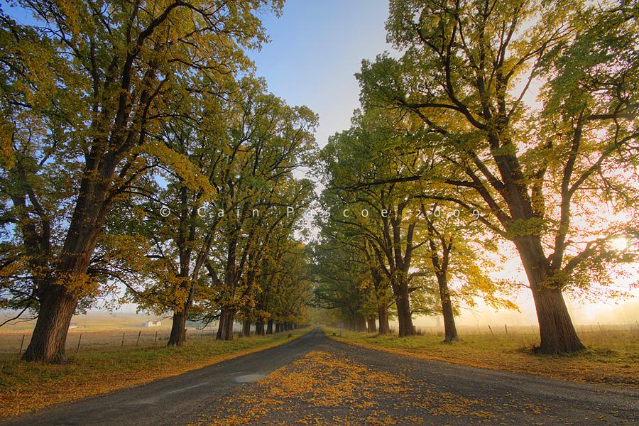 Autumn Road by CainPascoe