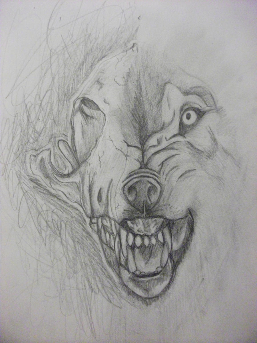 wolf skull by sugoi-ka...