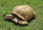 STOCK - Tortoise by Whisper292