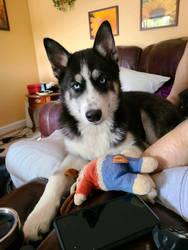 Meet Sasha!