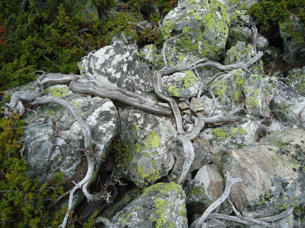 rocks and wood by froggiebau