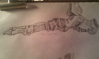 Skeleton Foot Study by shineyLite