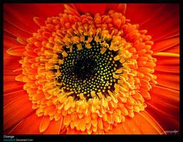 Orange by HamidSHS