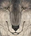 Wolf Face by Crazdude
