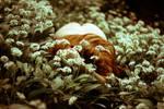 Sleeping Beauty by Echosyne