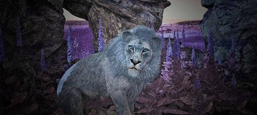 Lion Study