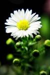 Flower-43