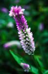 Flower-53