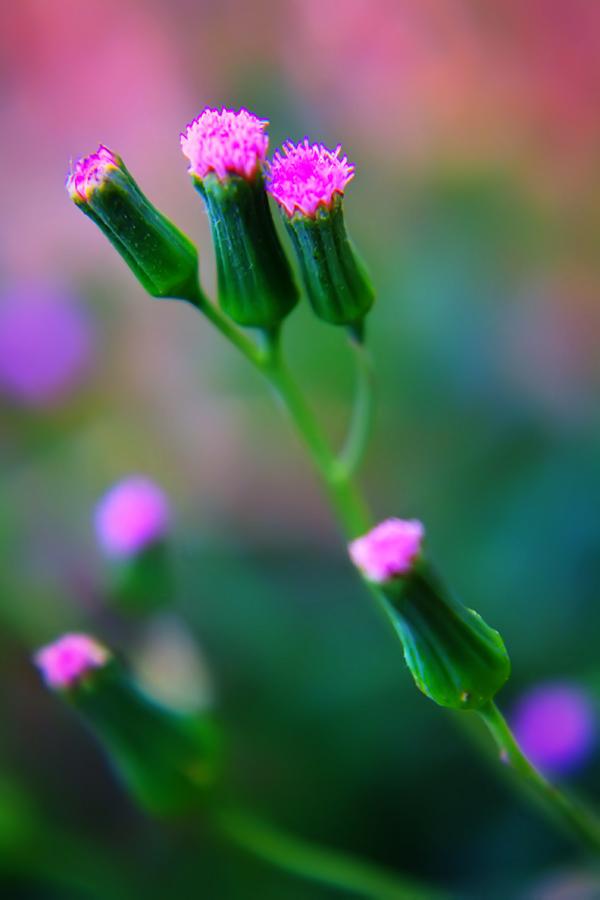 Flower-56 by josgoh