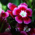 Flower-57