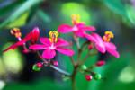 Flower-64 by josgoh