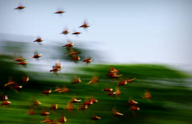 Flying Off Fast by josgoh