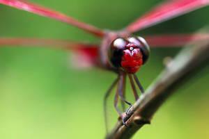 Dragonfly 10 by josgoh