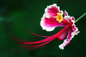 Flower-121 by josgoh
