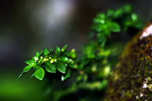 Plant-01 by josgoh
