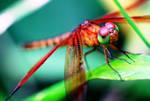 Dragonfly 12