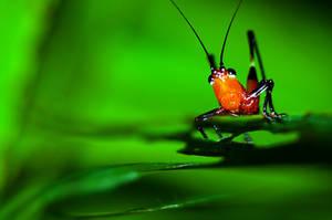 Grasshopper 05 by josgoh