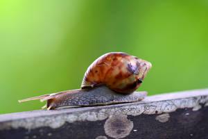 Snail 03 by josgoh