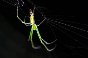 Spider 13 by josgoh