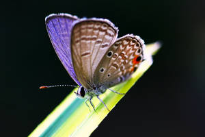 Butterfly 07 by josgoh