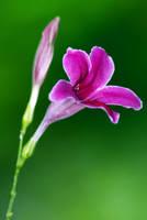 Flower-151 by josgoh