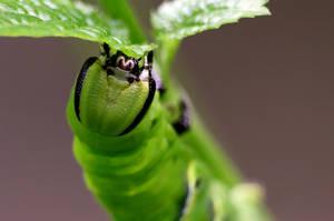 Caterpillar 02 by josgoh